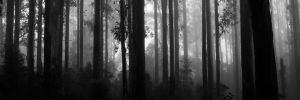Shades of the Forest - Grey Shadows